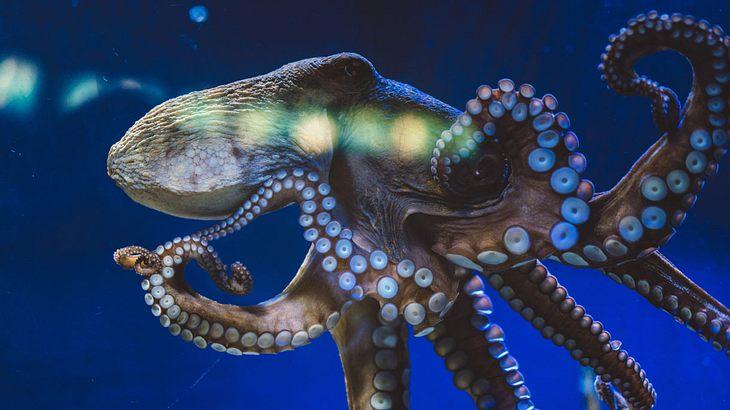 MDMA-Test an Kraken: Ergebnis erstaunt selbst Wissenschaftler