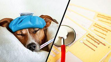 Arbeitsrecht: Darf ich wegen eines kranken Hundes zu Hause bleiben?