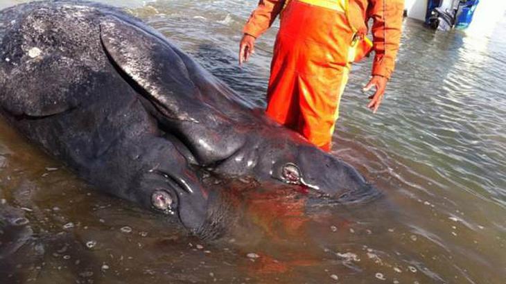 Eine mysteriöse Kreatur wurde an einen mexikanischen Strand gespült