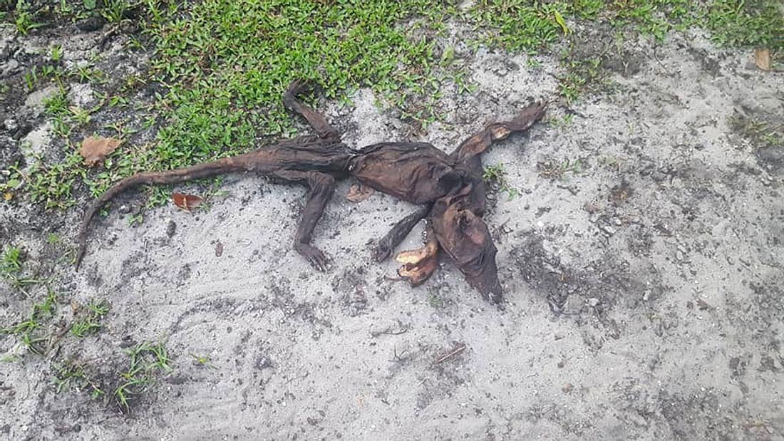 Rätselhafte Kreatur in Florida.