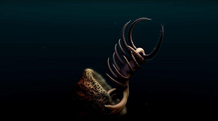 Forscher haben eine 500 Millionen Jahre alte Tiefsee-Kreatur entdeckt