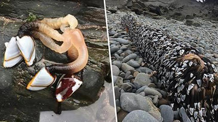 Alien-ähnliche Kreatur an englische Küste geschwemmt