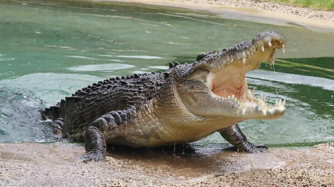 Diese Urlauberin filmt, wie sie von einem Krokodil attackiert wird