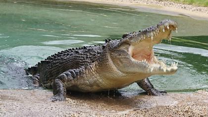 Urlauberin filmt, wie sie von einem Krokodil attackiert wird