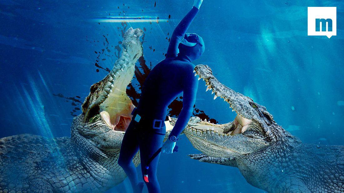 Beim Krokodil bist du die Beute. Immer.