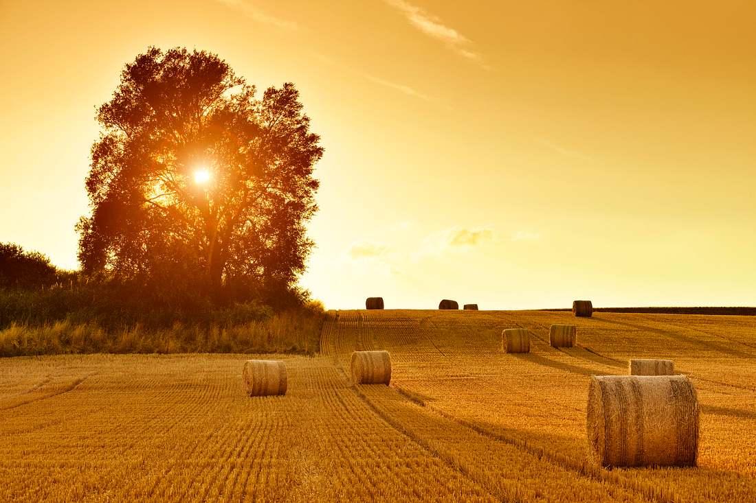 Feld mit Strohballen im Sonnenuntergang