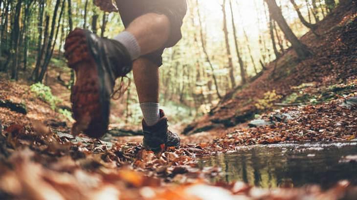leichte Wanderschuhe Wald