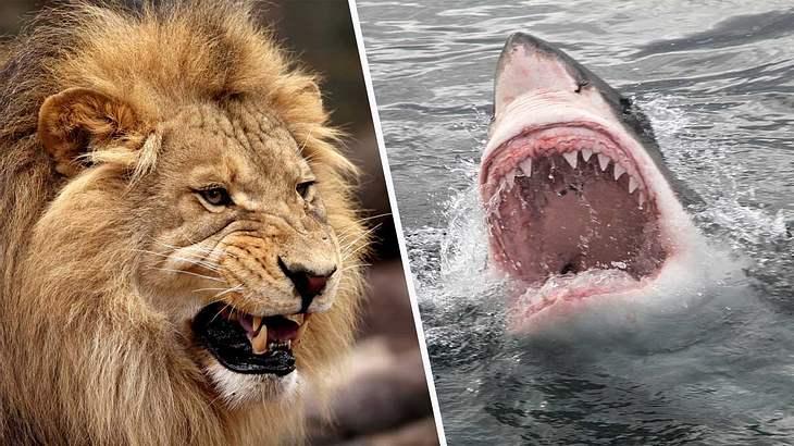 Die tödlichsten Tiere der Welt