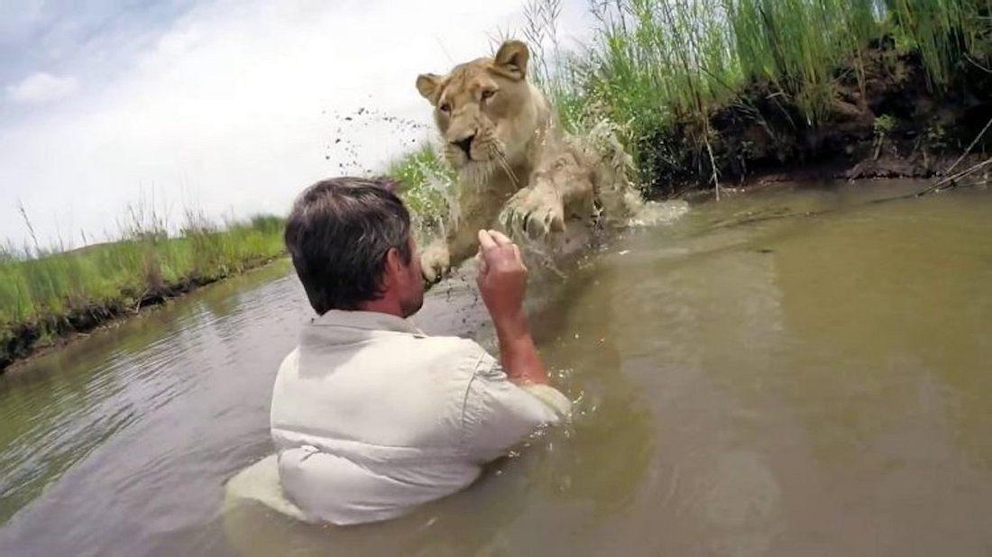 GoPro-Video: Mann retten Löwenjunge, das Wiedersehen ist unglaublich