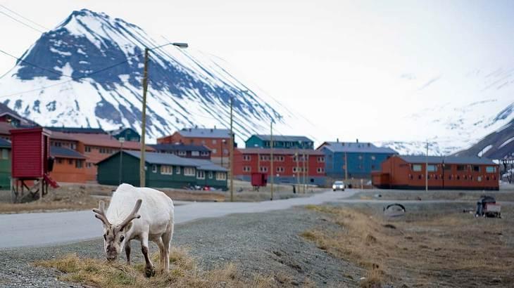 In Longyearbyen ist sterben verboten