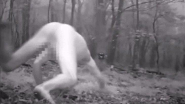 Mann nimmt LSD – und verwandelt sich in einen nackten sibirischen Tiger