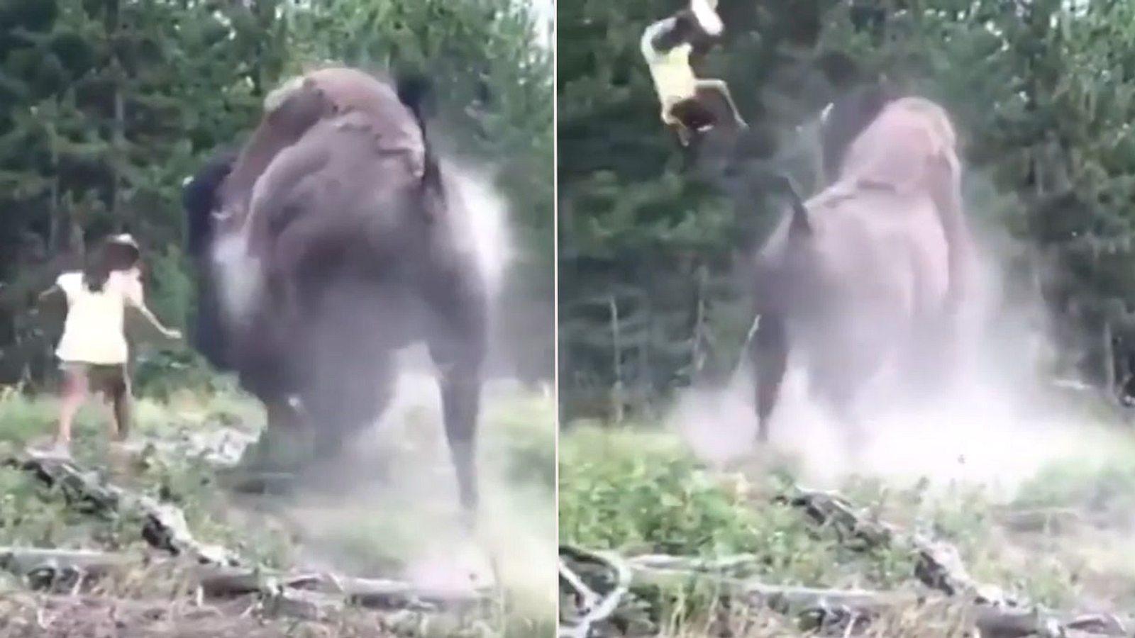 Bison rammt Mädchen per Büffel-Bombe in andere Dimension