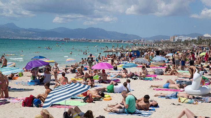 Eine grausame Tradition kehrt nach Mallorca zurück (Symbolfoto)