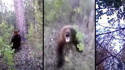 Mann provoziert Kampf mit einem Bär – Fehler - Foto: YouTube / Новости Камчатки - Кам 24