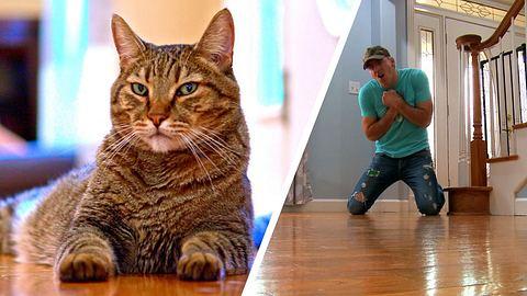 Mann täuscht Katze eigenen Tod vor - Foto: YouTube / TheMeanKitty