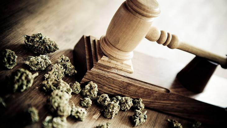 Zoll verbrennt Marihuana im Wert von mehreren Millionen Euro