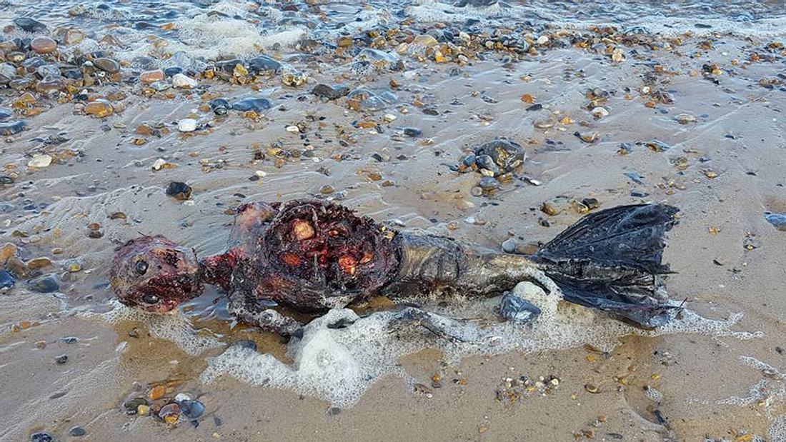 Mann findet die Überreste einer Meerjungfrau am Strand