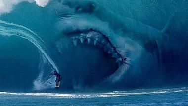 Neuer Superpredator: Mysteriöses Raubtier frisst Weiße Haie