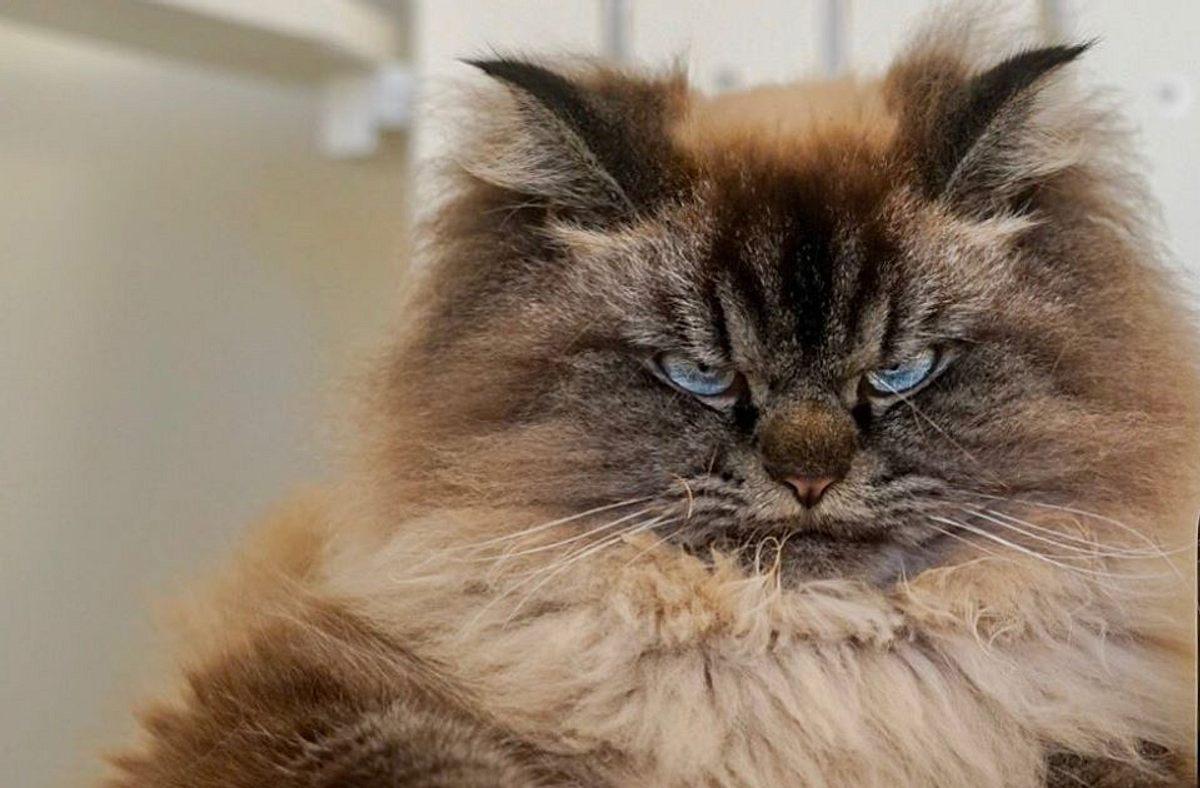 Viral-Sensation: Die Katze, die alles hasst, muss man einfach lieben