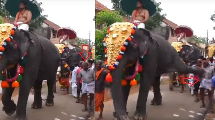 Ein Elefant tritt einen Mann während eines Straßenfestes