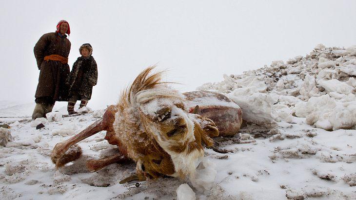 """""""Dsud"""" heißt das Wetterphänomen in der Mongolei"""