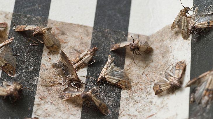 Tote Motten
