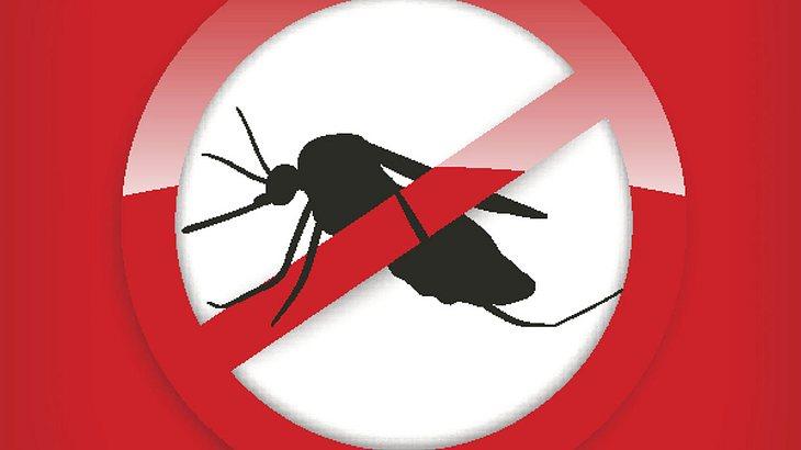 Experten besorgt: Neue Mückenart bläst zum Angriff auf Deutschland