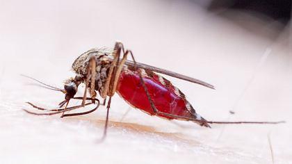 Mückenstich: Jucken sofort stoppen mit dem Löffeltrick