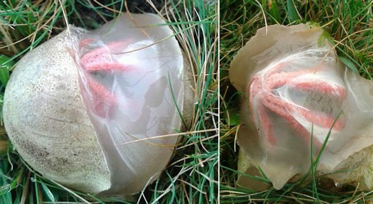 Alien-Ei? Mysteriöser Organismus in Garten gefunden