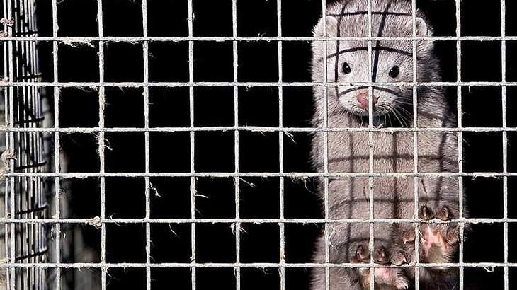 Norwegen lässt Pelzfarmen schließen