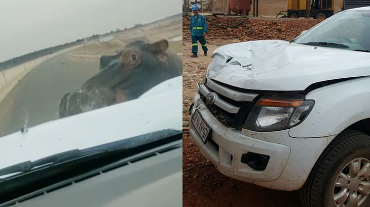 Crash-Video: Nilpferd schrottet Safari-Jeep