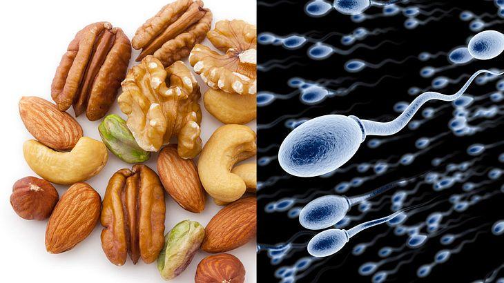 Das Essen von Nüssen und Mandeln steigt die Spermienqualität