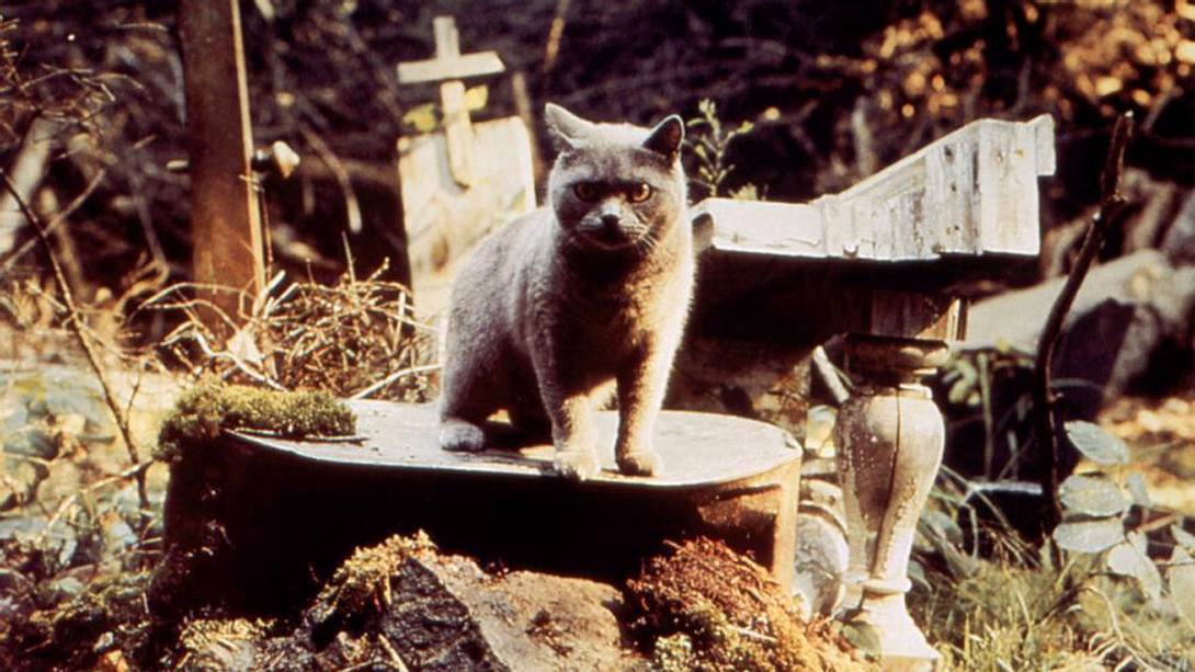 """""""Friedhof der Kuscheltiere"""": Neuverfilmung des Stephen King-Horrors - Foto: Paramount"""