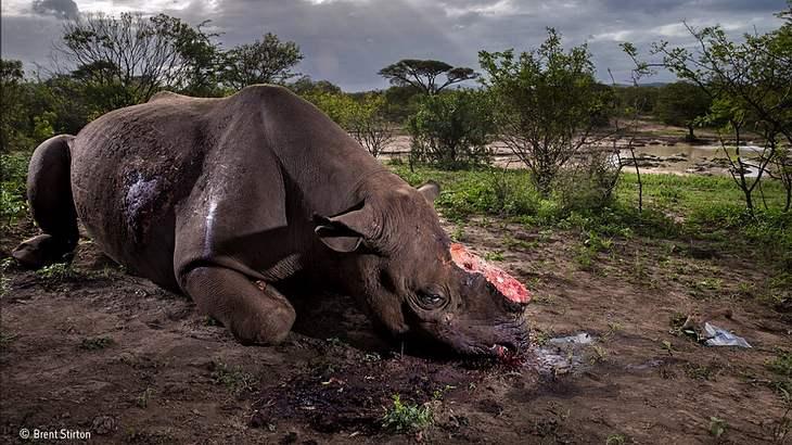 Wildlife-Foto des Jahres: Die Schönheit im Grausamen finden