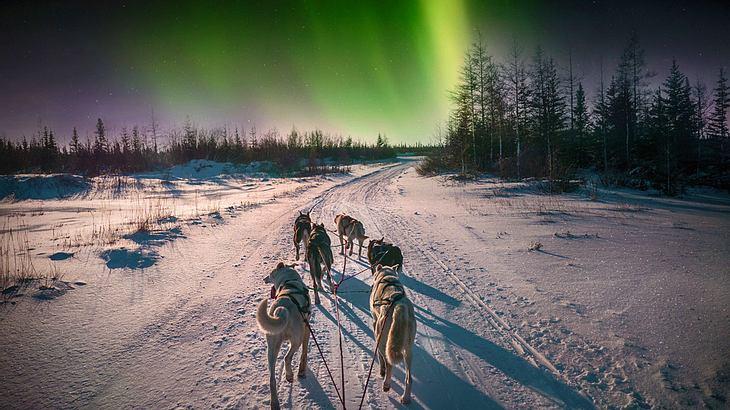 Schlittenhunde im Polarlicht