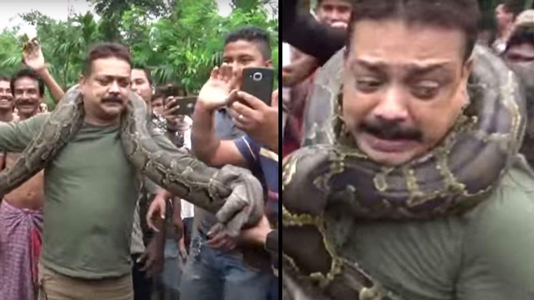 Mann wird beinahe von einer Python erwürgt