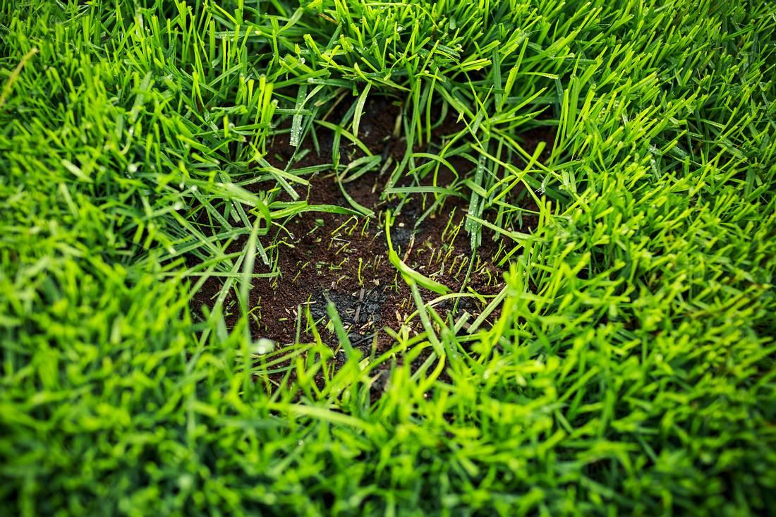 Kahle Stelle im Rasen