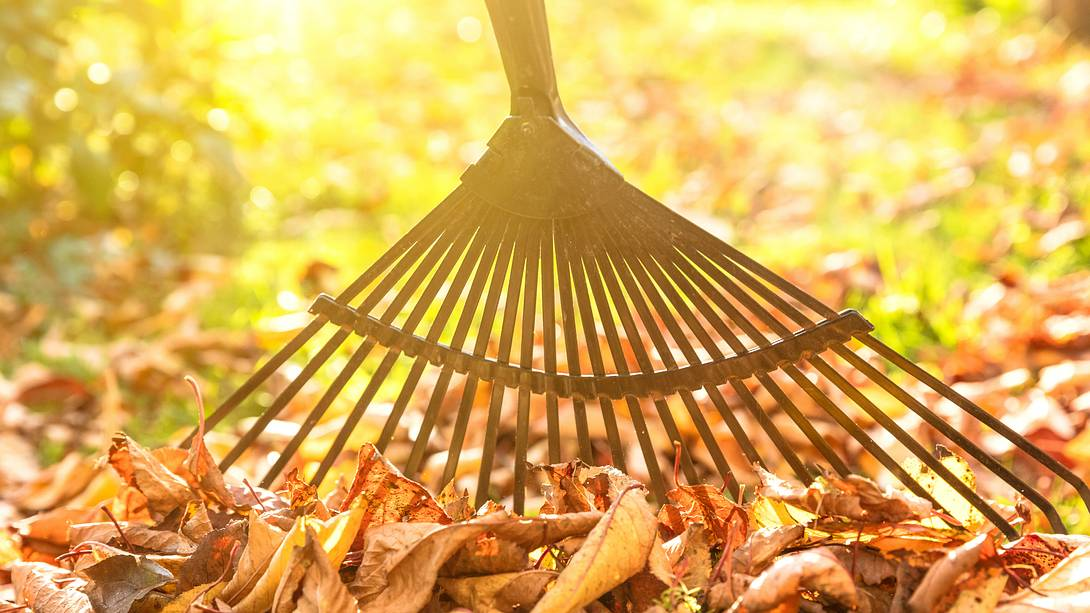 Ein Rechen ist perfekt für den Herbst - Foto: iStock/Nikada