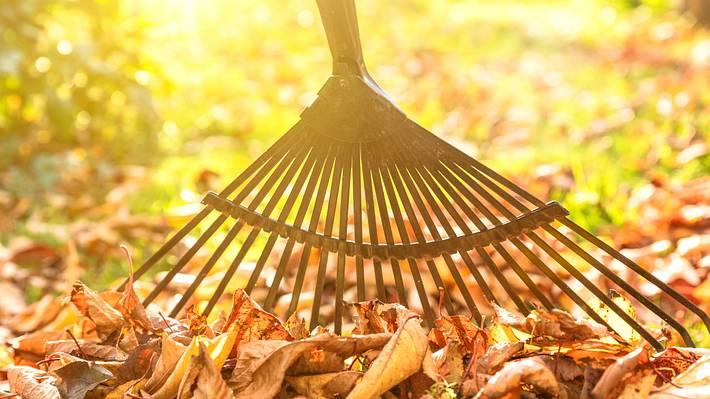 Rechen: Die Alleskönner für deinen Garten und Tricks wie du deinen Garten winterfest machst