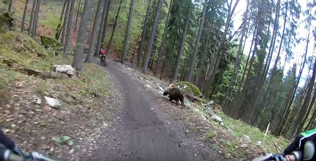 Bär und Mountainbiker im Rennen um Leben und Tod