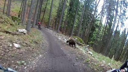Wettrennen auf Leben und Tod: Bär jagt Mountainbiker