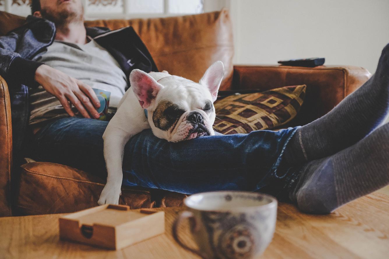Mann, der auf dem Sofa eingeschlafen ist, mit Hund auf dem Schoß
