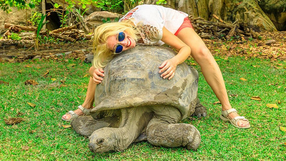 Riesenschildkröte mit Touristin