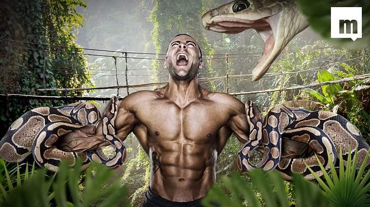 Das passiert, wenn du mit drei Riesen-Pythons kuschelst