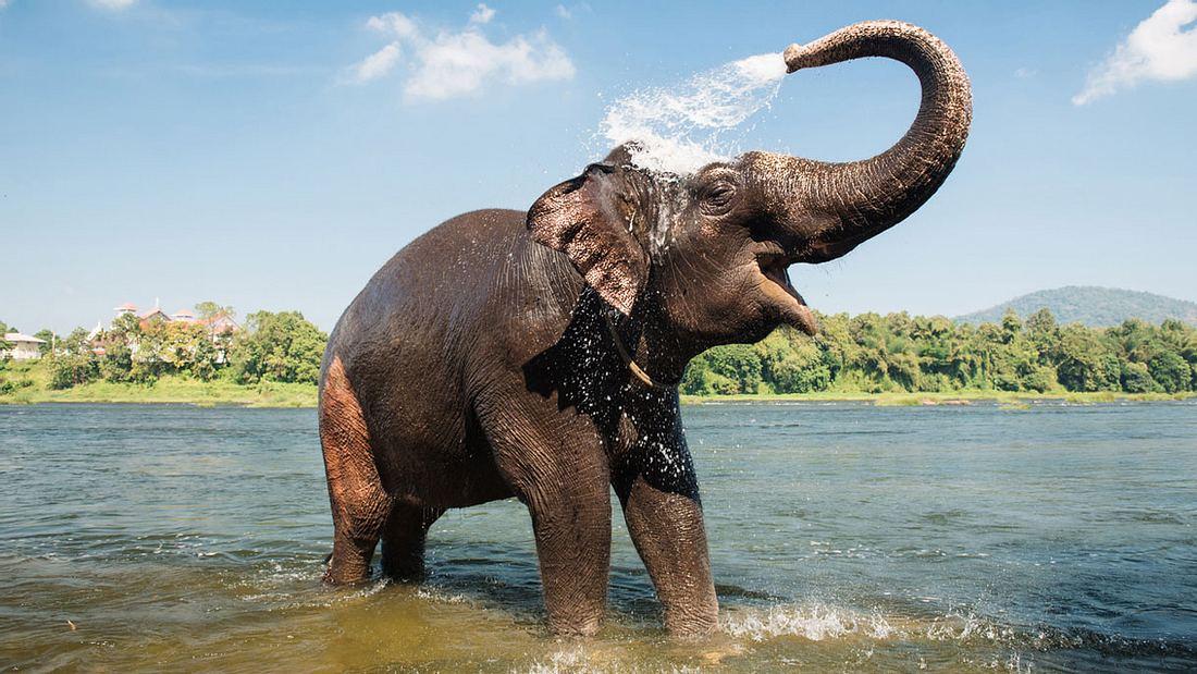 Elefant im Wasser