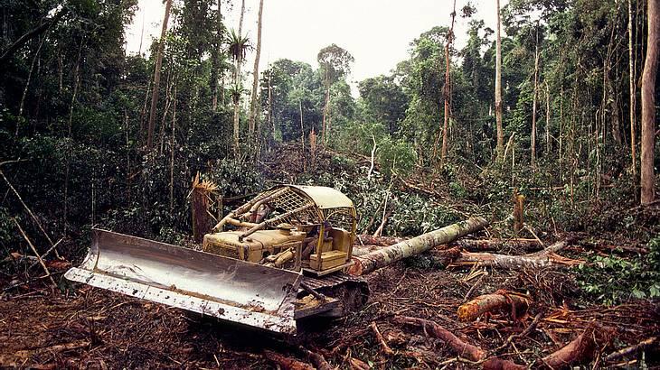 Rodungen im Regenwald