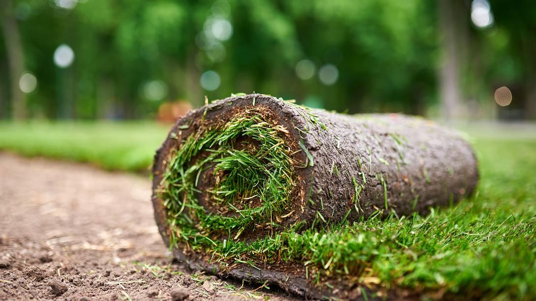 Rollrasen - Foto: iStock / sandsun