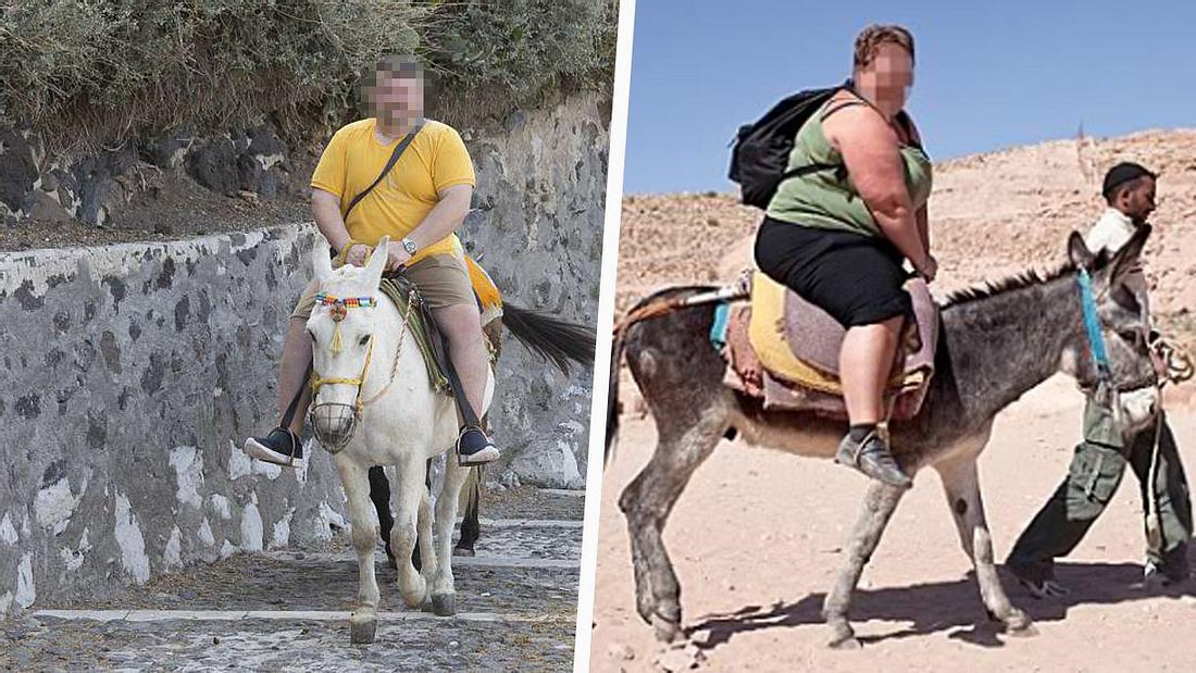 Fette Touristen schaden Eseln
