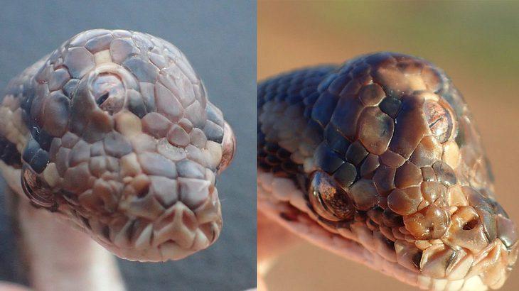 Die dreiäugige Schlange Monty