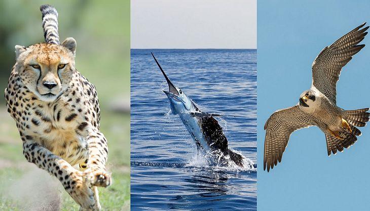 Schnellste Tiere Der Welt